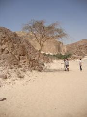 An oasis - Sinai Peninsular